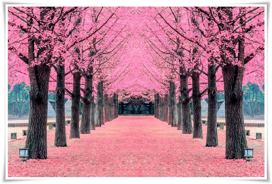 ทัวร์เกาหลี-Rail-Bike-Spring-Cherry-Blossom-5D3N(XJ)(APR-MAY18)-GT-ICN-XJ25