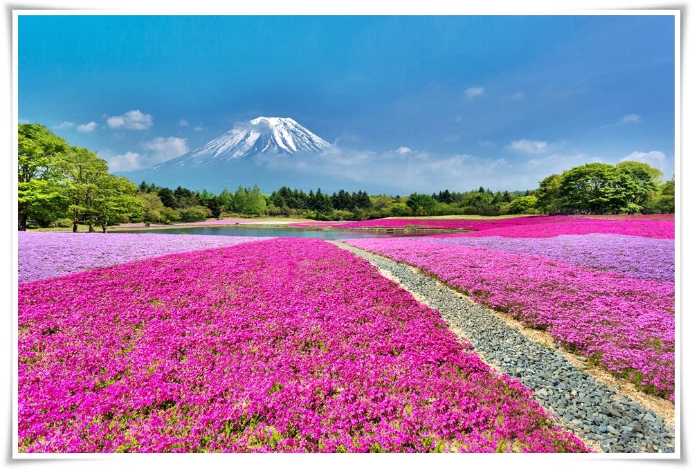 -ทัวร์ญี่ปุ่น-TOKYO-FUJI-PINKMOSS-ซุปตาร์สงกรานต์-6D3N-(APR18)(TG39)