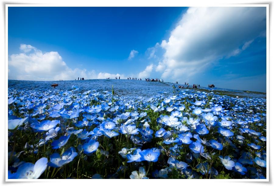 ทัวร์ญี่ปุ่น-SPARKLING-FLOWER-TOKYO-5-วัน-3-คืน-(OCT-17)