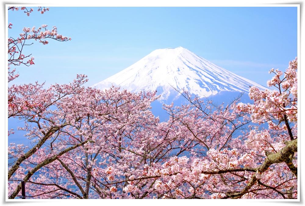 ทัวร์ญี่ปุ่น-SAKURA-GRAND-OSAKA-2-6D4N-(MAR-APR18)-(KIX03)