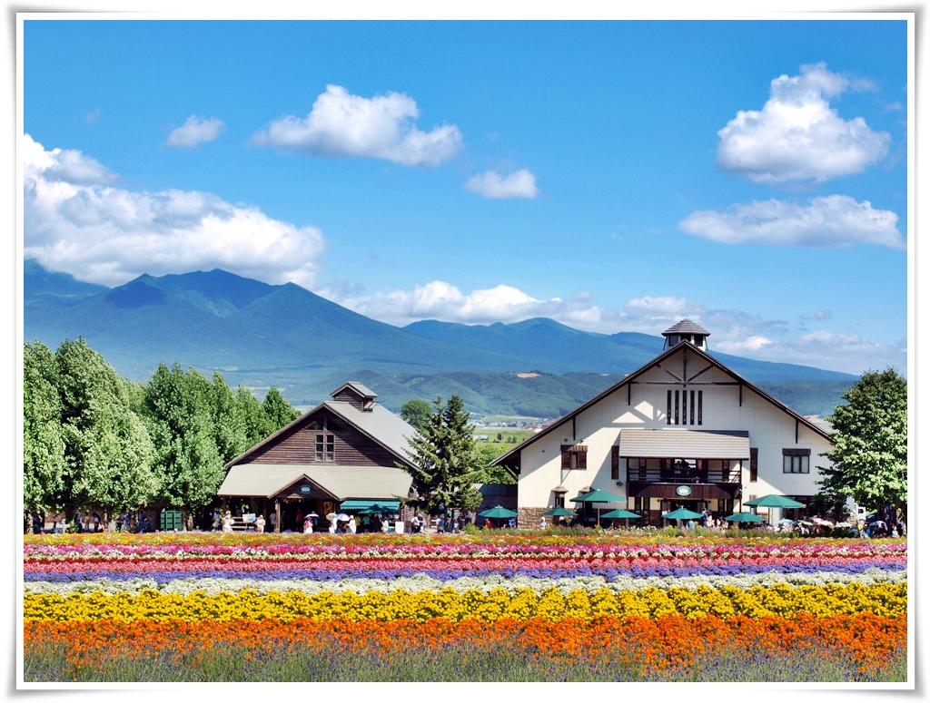 ทัวร์ญี่ปุ่น-HOKKAIDO-SUMMER-FLOWER-5D3N-(CLXJC534)-(AUG18)