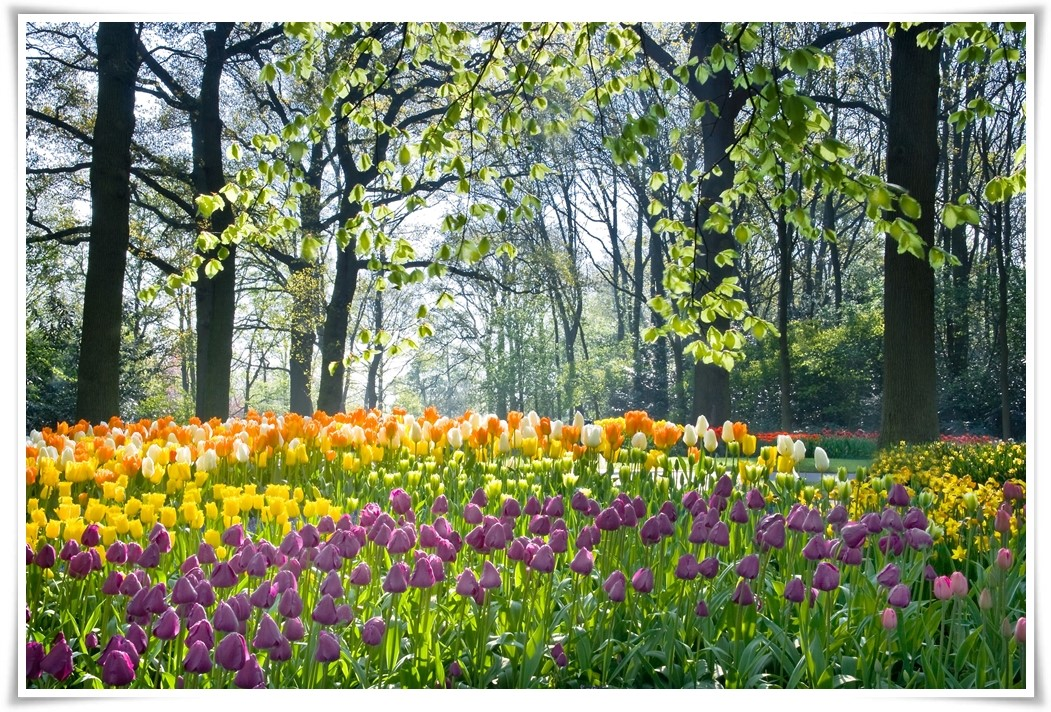 -ทัวร์ยุโรป-TULIP-LOVER-FRANCE-BELGIUM-LUX-GERMANY-NETHERLAND-8-วัน-5-คืน-BY-EY-(APR-MAY17)