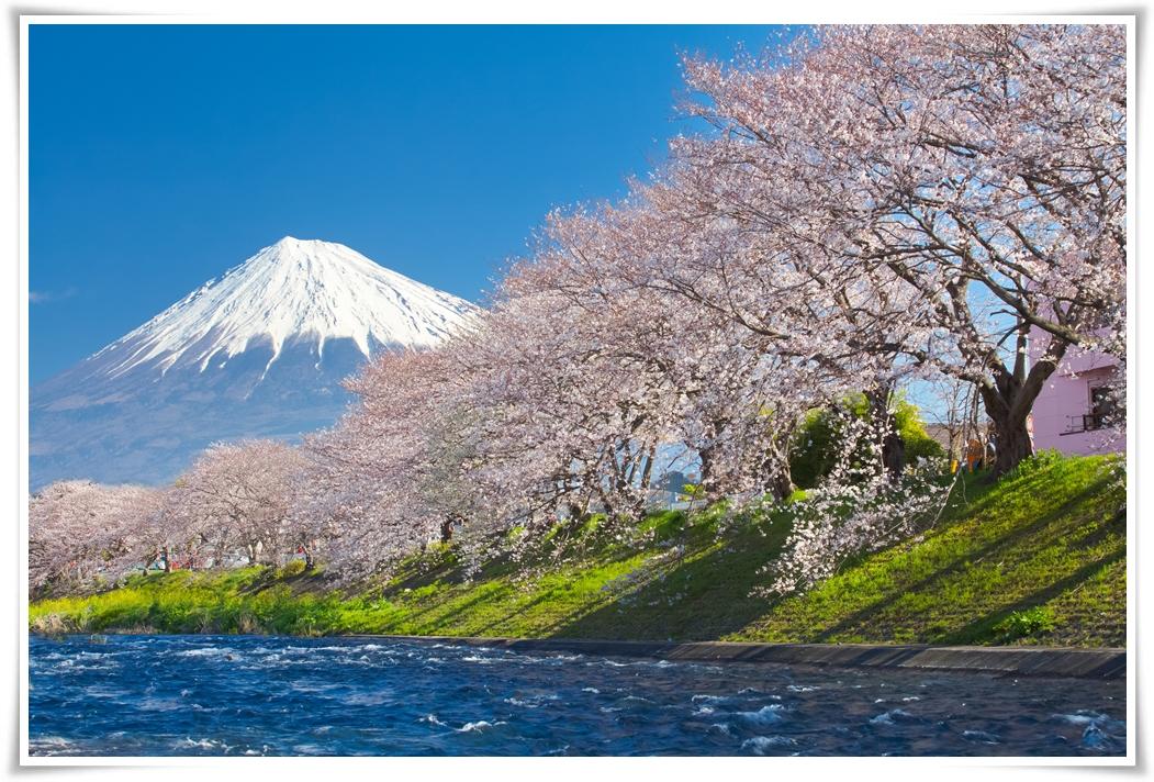 -ทัวร์ญี่ปุ่น-TOKYO-SAKURA-STRONG-5-วัน-3-คืน-(MAR-MAY-2017)