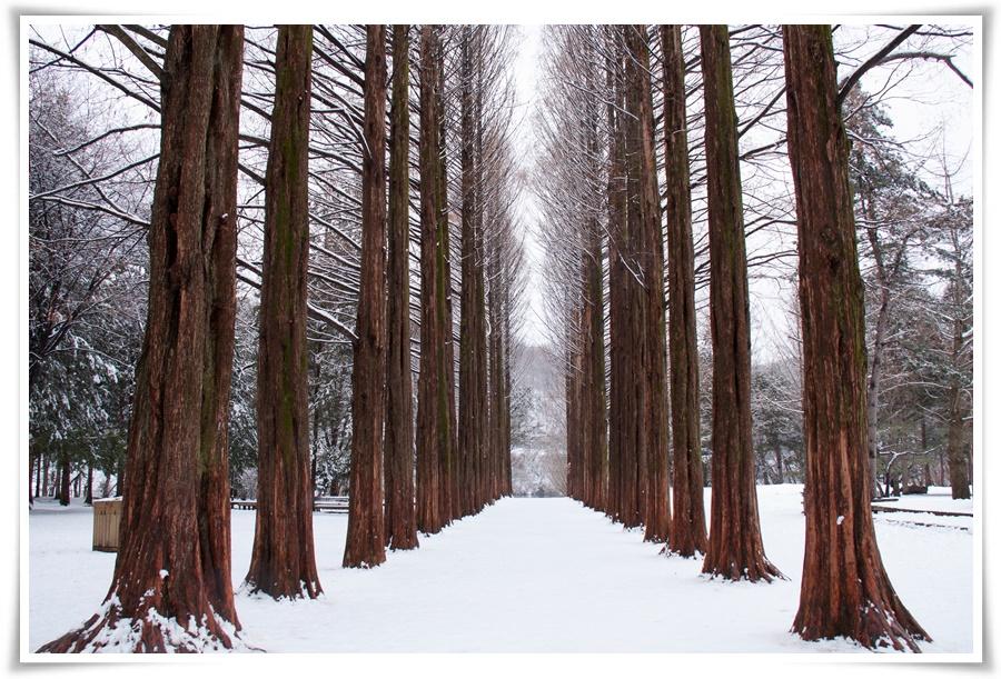 ทัวร์-เกาหลี-SNOW-WINTER-IN-KOREA-5-วัน-3-คืน-(NOV-DEC-16)