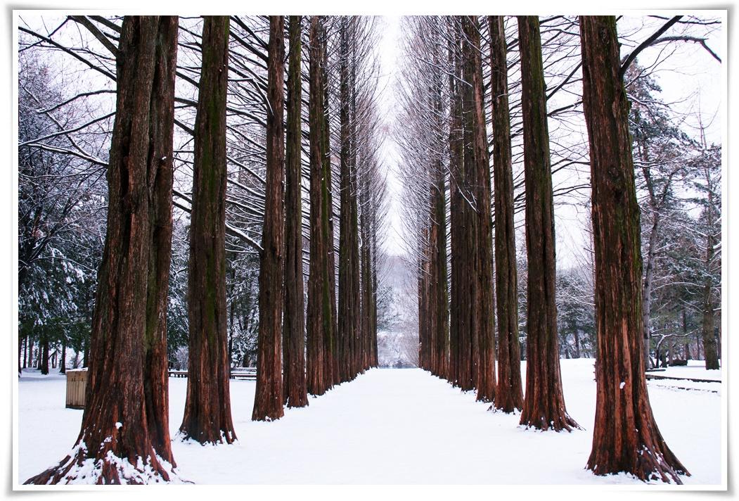 ทัวร์เกาหลี LIKE DREAM SKI SNOW IN KOREA 5 วัน 3 คืน (DEC17-JAN18)