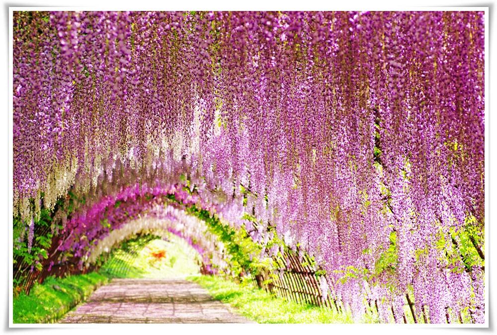 ทัวร์ญี่ปุ่นEXCLUSIVE-FLOWER-IN-TOKYO-5D3N(MAY18)(NRT18)