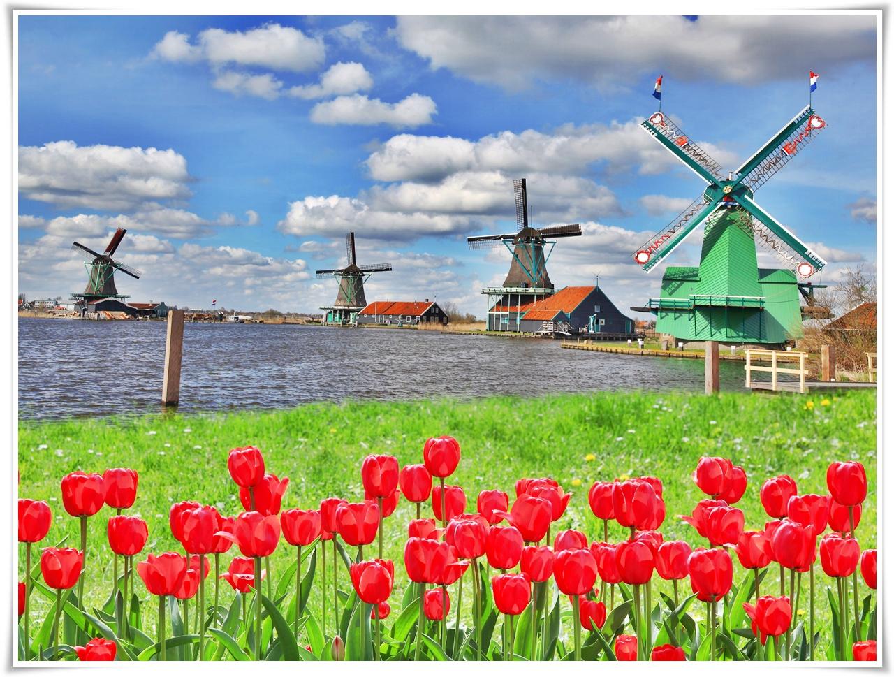 ทัวร์ยุโรป-TULIPS-FESTIVAL-ฝรั่งเศส-เบลเยี่ยม-เนเธอร์แลนด์-8วัน-5-คืน-(MAR-MAY18)