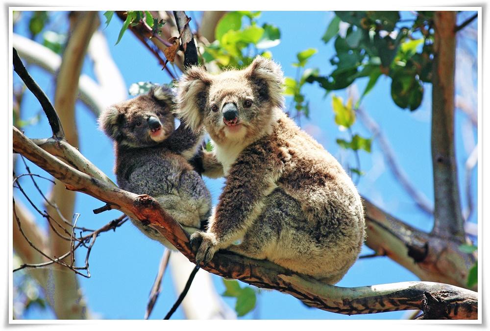 ทัวร์ออสเตรเลียBIG-HIGHLIGHT-MELBOURNE-5D3N(12-16APR18)