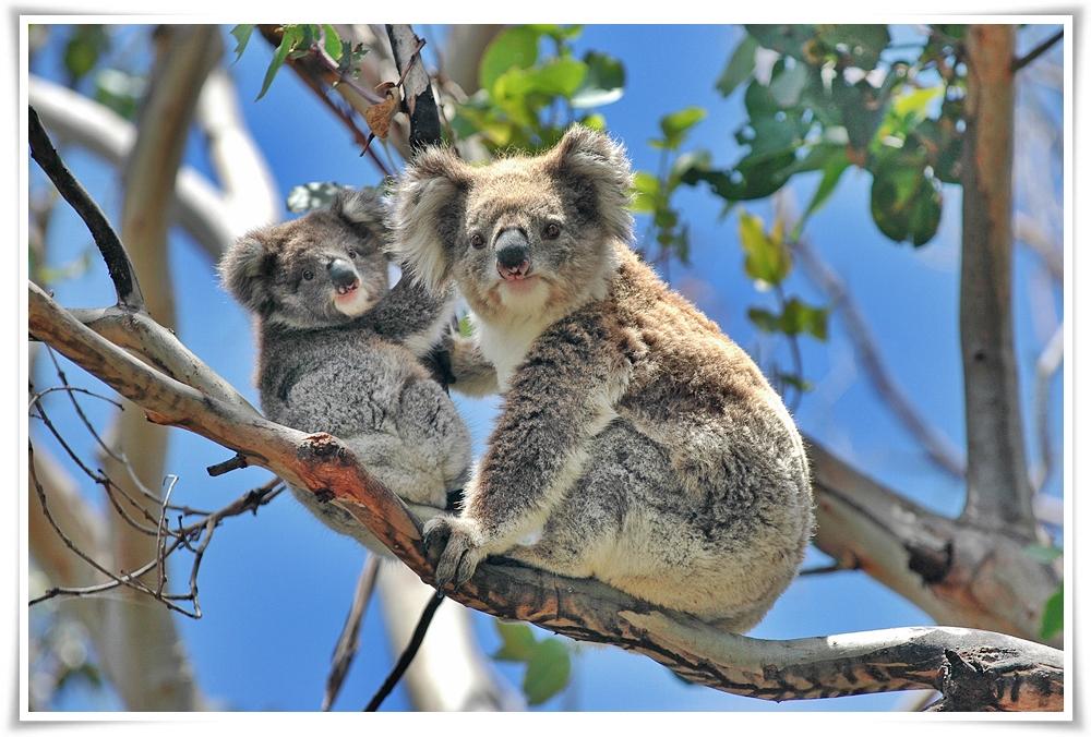 ทัวร์ออสเตเรีย-POPULAR-AUSTRALIA-6D-4N-(MAY-JUL18)