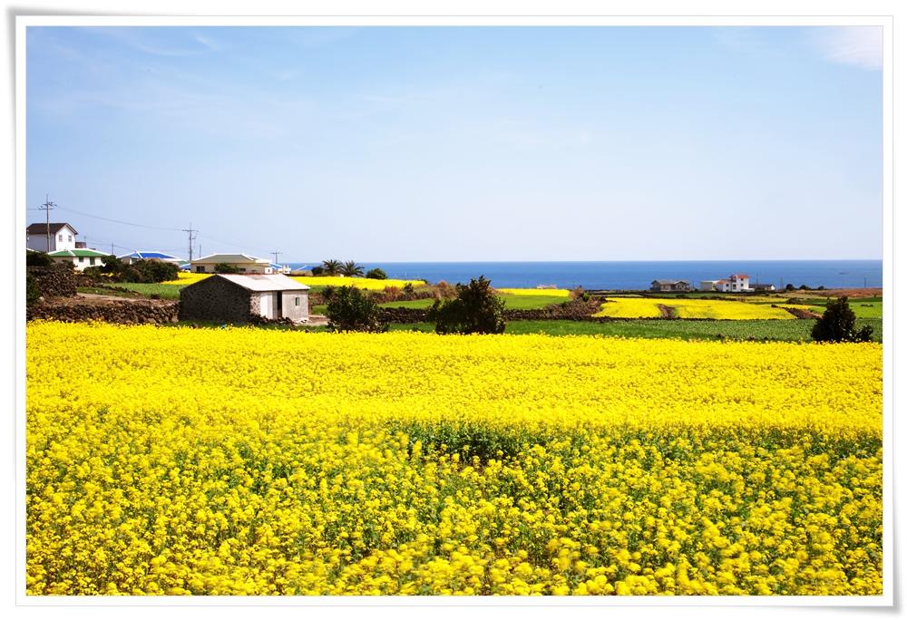 ทัวร์เกาหลี-JEJU-SPECIAL-SPRING-4D-2N-(APR-MAY18)