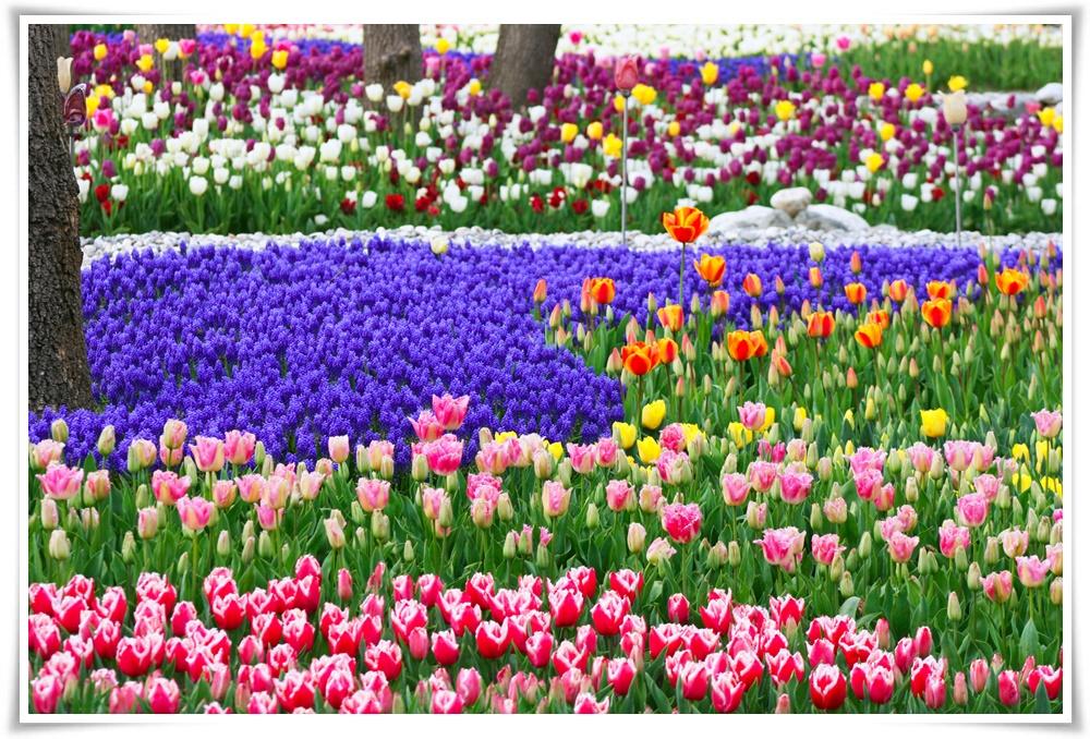 ทัวร์ตุรกี-Riviera-Tulip-Turkey-10D-8N-ESB-IST-(MAR-MAY18)