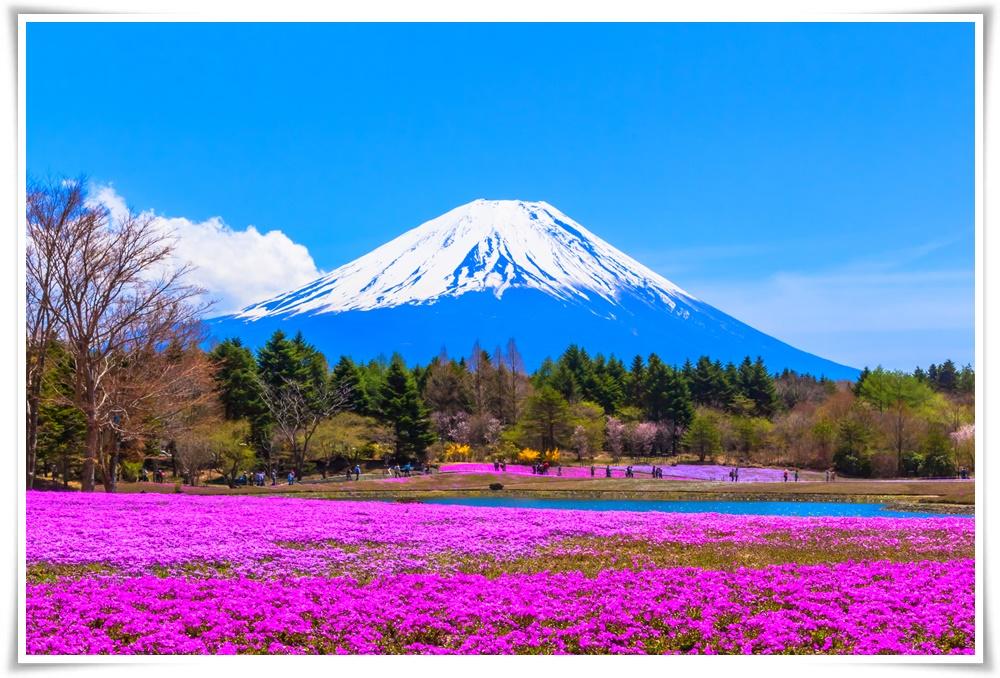 ทัวร์ญี่ปุ่น-WOW!-PINK-MOSS-โตเกียว-ฟูจิ-พิงค์มอส-4วัน-3คืน-(APR-MAY18)