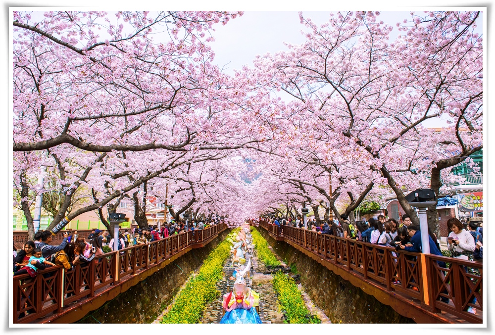 -ทัวร์เกาหลี-ปูซาน-เทศกาลJINHAE-CHERRY-BLOSSOM-6วัน-4คืน-(MAR18)