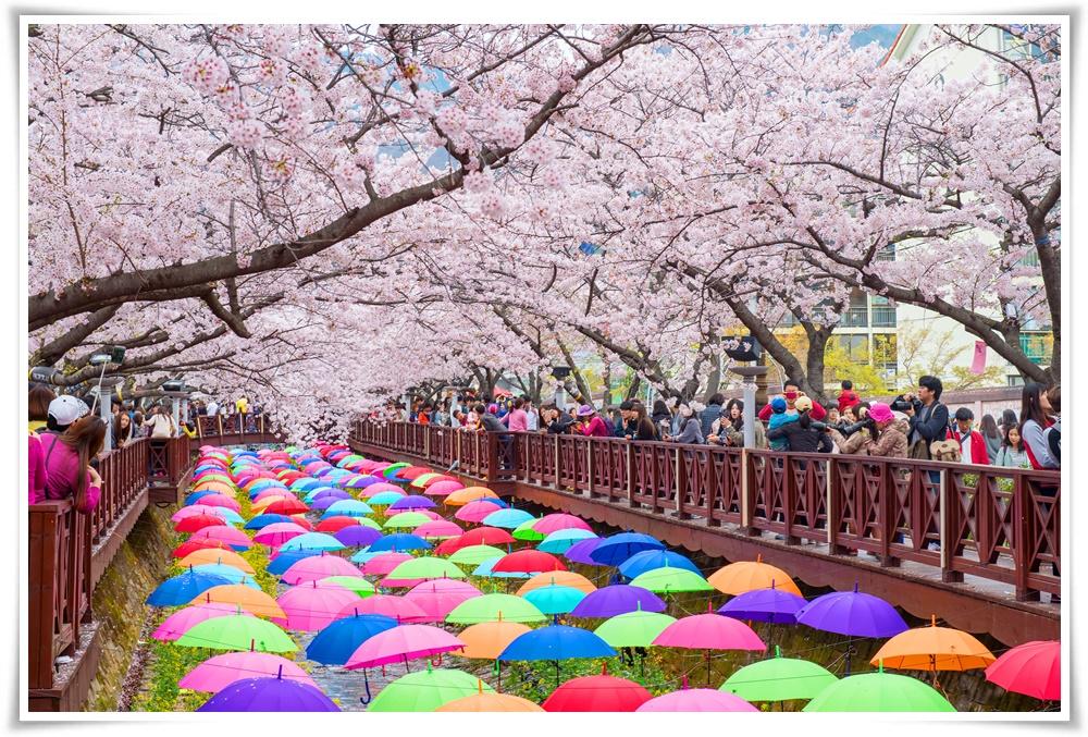 ทัวร์เกาหลี-ราคาถูก-BUSAN-PLUS-+-SPECIAL-BLOSSOM-4D2N-(MAR-APR18)