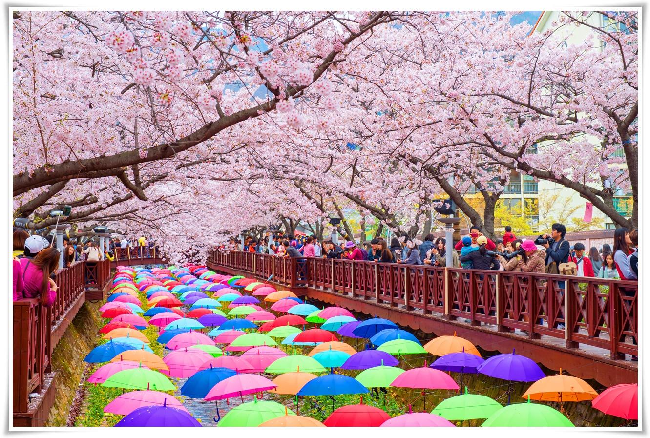 ทัวร์เกาหลี-BUSAN-PLUS-+-SPECIAL-BLOSSOM-4วัน-2คืน-(MAR-APR19)