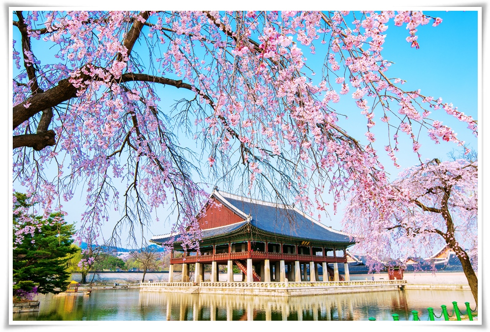 ทัวร์เกาหลี-KOREA-PLUS+SPECIAL-SPRING-4D-2N(MAY18)