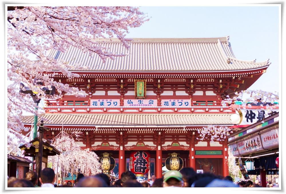 ทัวร์ญี่ปุ่น-TOKYO-SAKURA-BLOSSOM-5D-3N(MAR-MAY18)(JJP16)