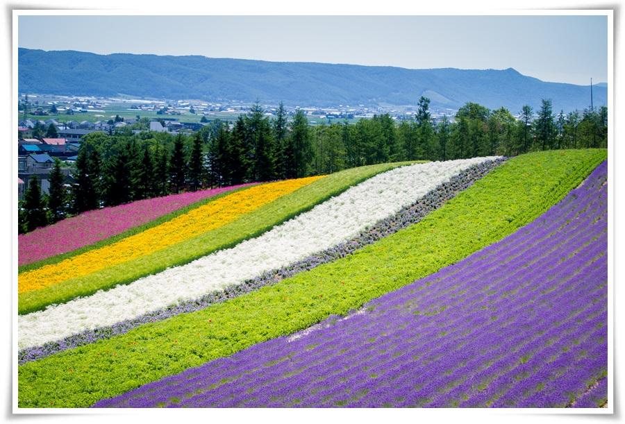 ทัวร์ญี่ปุ่น-HOKKAIDO-SUMMER-FLOWER-6-D-3-N-(JUL-17)