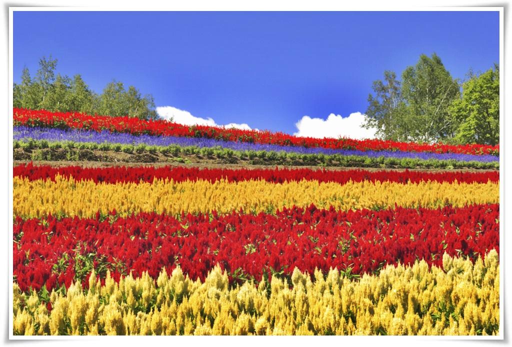 ทัวร์ญี่ปุ่น-HOKKAIDO-FLOWER-&-MELON-LOVER-6DAYS-4NIGHT