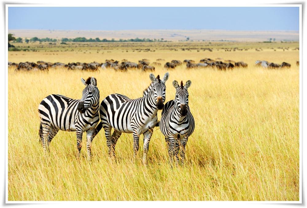 ทัวร์เเอฟริกา-EXOTIC-SOUTH-AFRICA-8D-5N-(MAR18)-(GOT-JNB-EK001)
