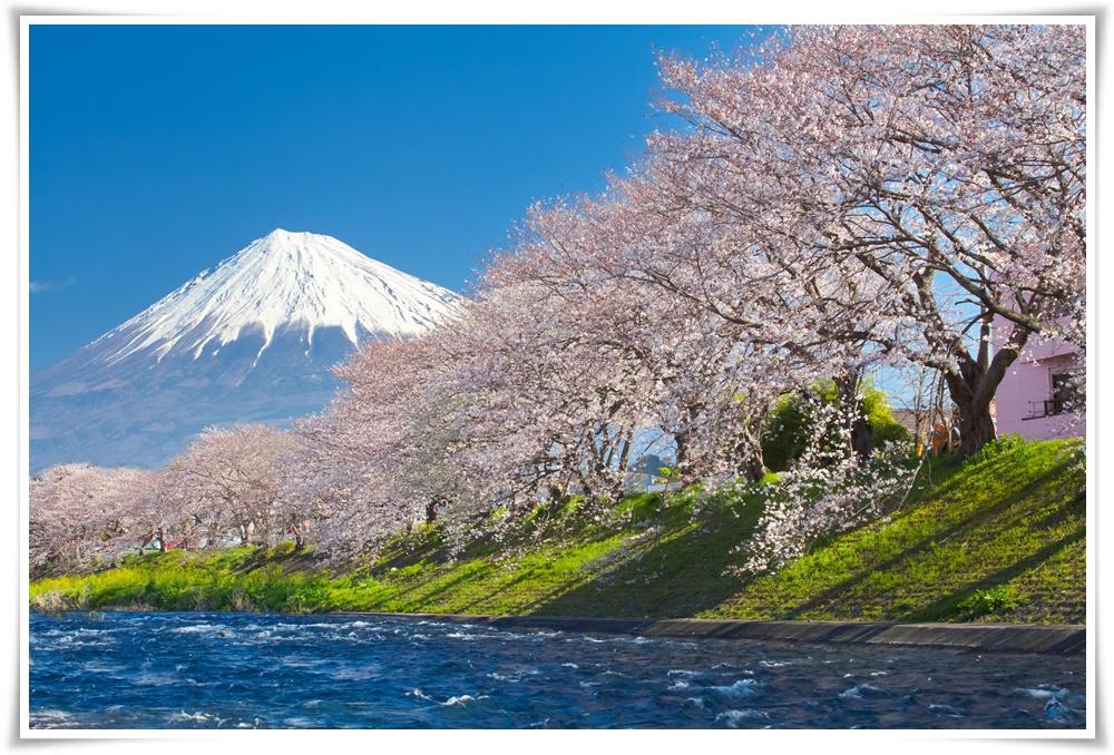ทัวร์ญี่ปุ่น-FANTASY-WINTER-SAKURA-5D3N(FEB-MAR18)