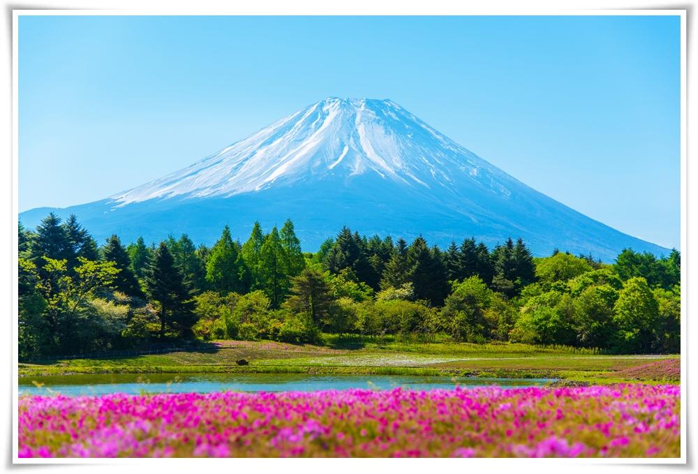 ทัวร์ญี่ปุ่น-TOKYO-FUJI-ซุปตาร์-พิงค์กี้-พิงค์กี้-5D3N-(MAY-JUN18)-(XJ35)