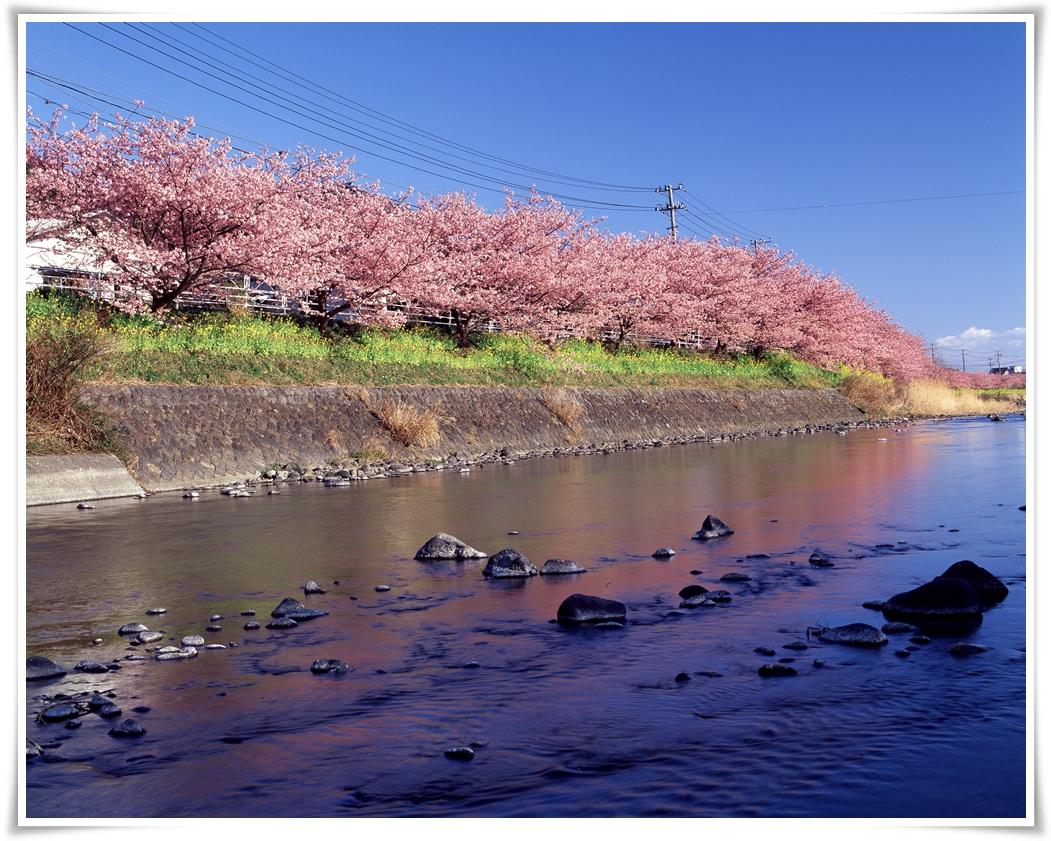 ทัวร์ญี่ปุ่น-SAKURA-FULL-BLOOM-IN-TOKYO-5-วัน-3-คืน-(MAR-APR-2017)