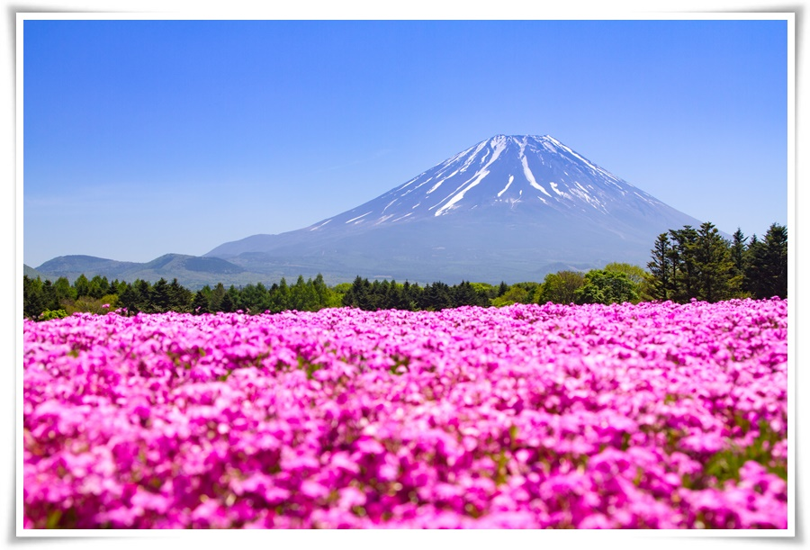 ทัวร์ญี่ปุ่น-STRONG-PINKMOSS-IN-TOKYO-5-วัน-3-คืน-(-MAY-JUN-17)