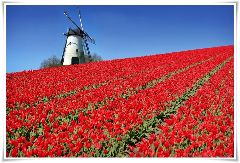 ทัวร์ยุโรป-TULIP-LOVER-FRANCE-BELGIUM-LUX-GERMANY-NETHETLAND-8D5N-(APR-MAY18)-CDG02