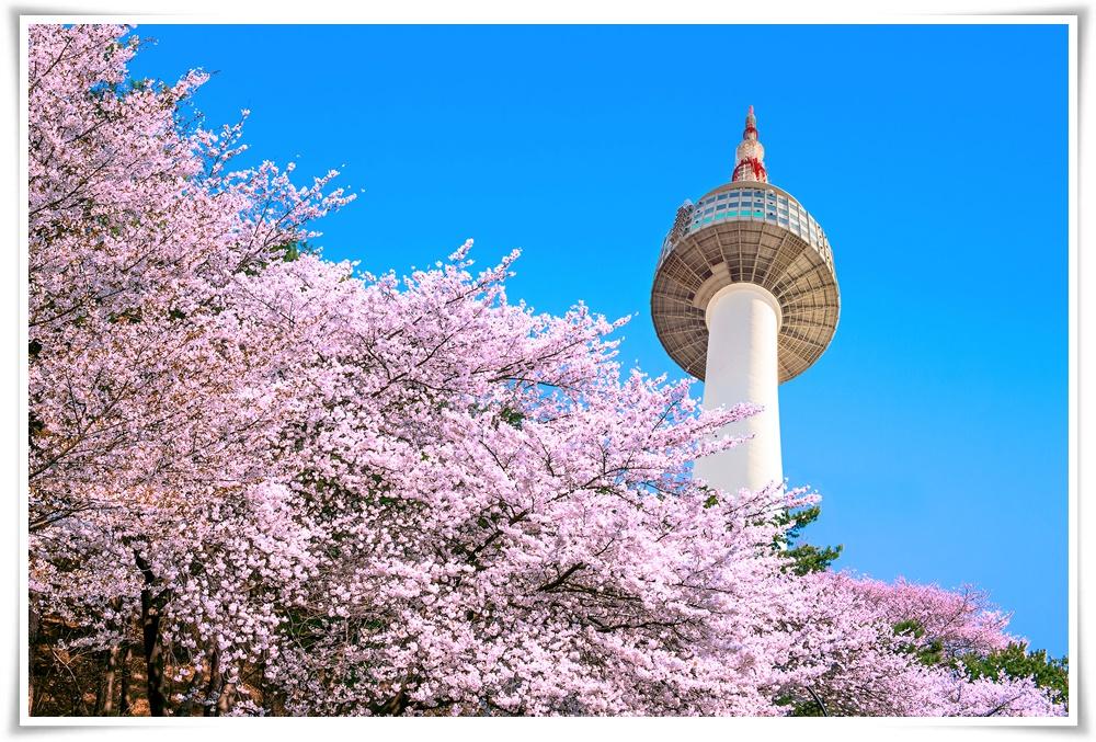 ทัวร์เกาหลี-TRENDY-SPRING1-5D3N(MAR-MAY18)