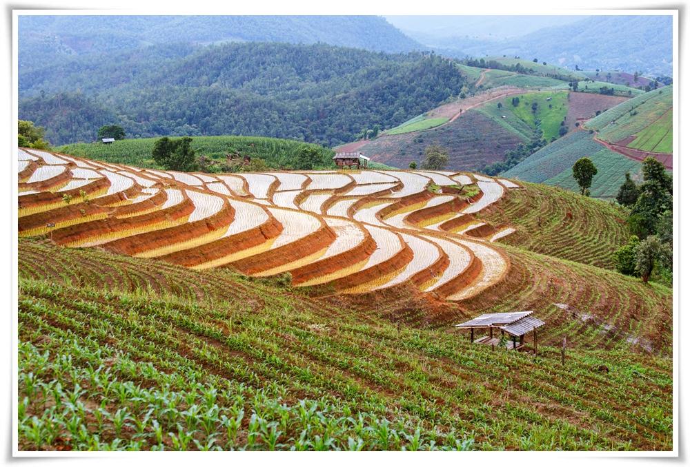 ทัวร์จีน-คุนหมิง-นาขั้นบันไดหยวนหยาง-ทุ่งดอกมัสตาร์ด-5วัน-4คืน-(MAR18)