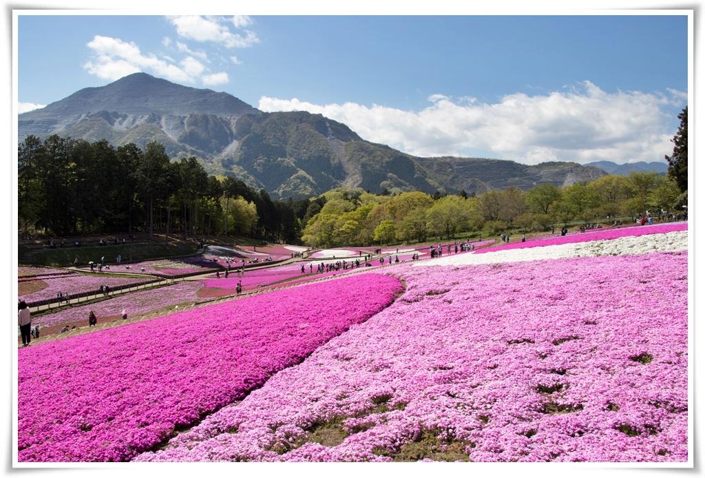 ทัวร์ญี่ปุ่น-SPELL-PINKMOSS-IN-HOKKAIDO-6D4N-(HOK02)(MAY18)