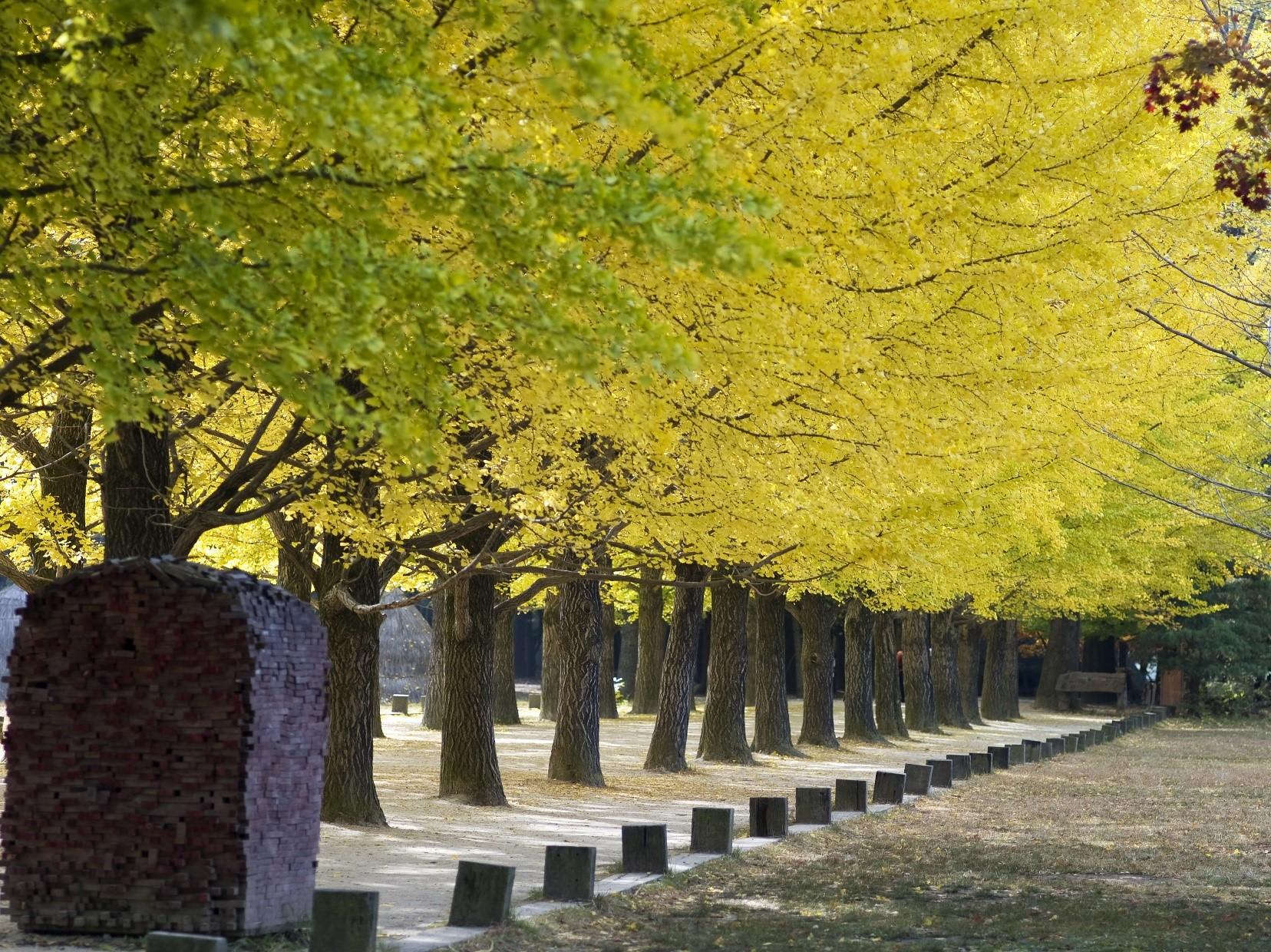 ทัวร์เกาหลี-Enjoy-Romantic-Autumn-in-seoul-5D-3N-(NOV18)-GO2ICN-TW005