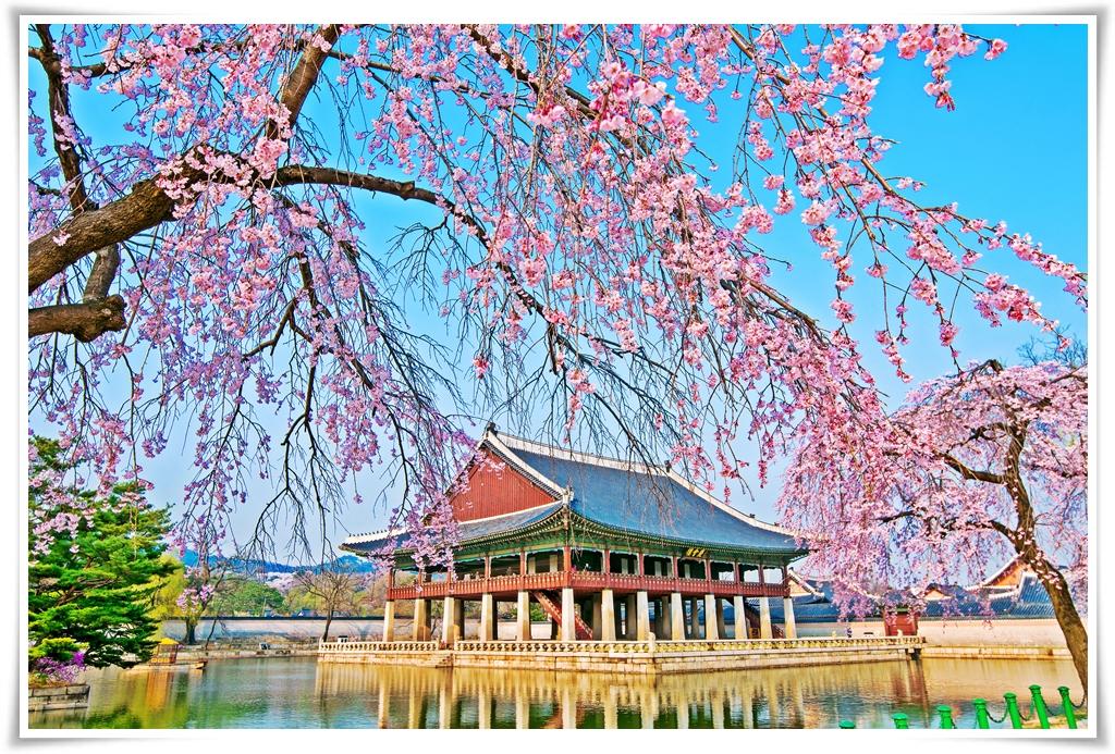 ทัวร์เกาหลี เกาะนามิ SPRING SEASON IN KOREA 5 วัน 3 คืน