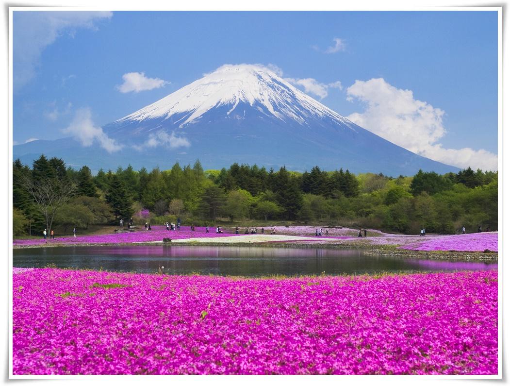 ทัวร์ญี่ปุ่น HAPPY โตเกียว ฟูจิ 6 วัน 4 คืน